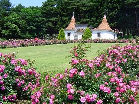 ランドスケープローズでふちどられた庭園