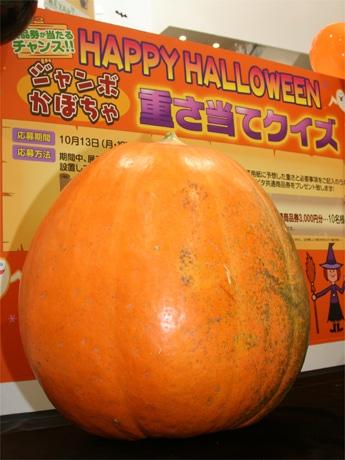 北海道産のジャンボかぼちゃ