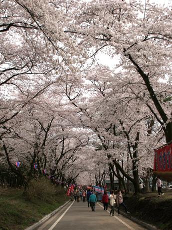 平日にも関わらず多くの人が。新潟からのバスツアー客も