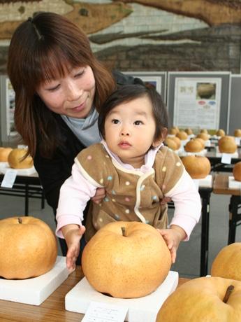 ジャンボナシにびっくり、結里愛ちゃん(1歳)。タッチしているナシが優勝した「あたご」