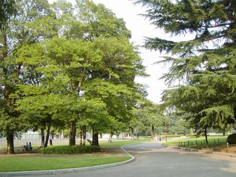 群馬の森。面積は26.2ヘクタールあり、シラカシ、クヌギ、オニグルミ、エノキ、コナラなどの大木が