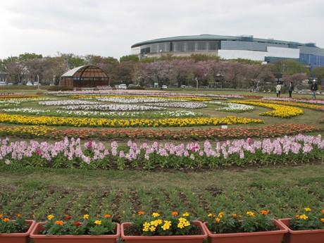 突如出現した直径30メートルの花壇には園芸店を越える種類の春の花が
