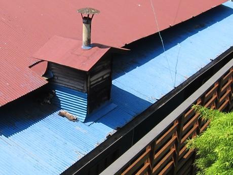 これからの季節、晴れれば「熱いトタン屋根の猫」に