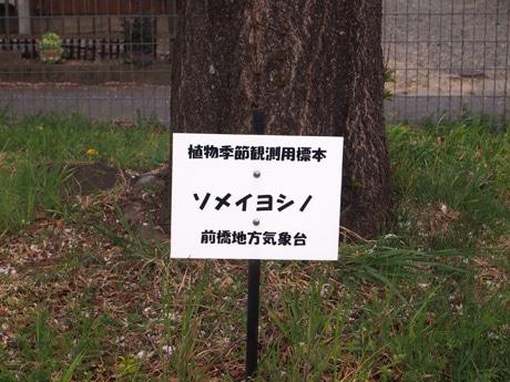 一般的に標準木と呼ばれる木は「植物季節観測用標本」