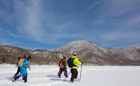 新雪に残されたシカやウサギ、テンなど野生動物の足跡、運が良ければキレンジャクやヒレンジャクなどの野鳥も