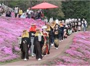 「きつねの嫁入り」出前行列 芝桜を背景にコミカルな民族絵巻