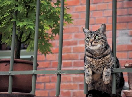 パリのネコ(C)Mitsuaki Iwago