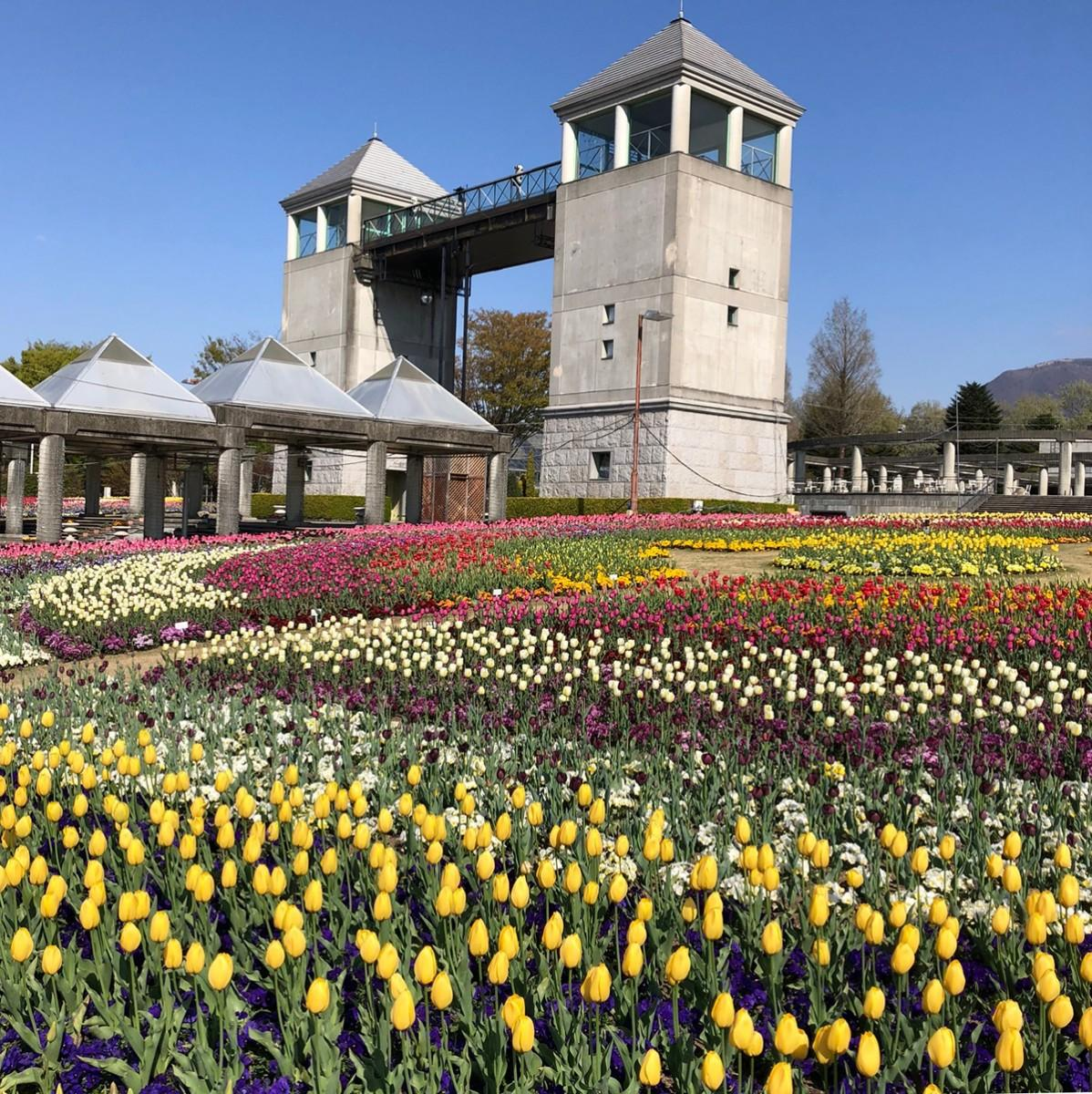 6000平方メートル、すべてチューリップ。「フラトピア大花壇」4月9日撮影
