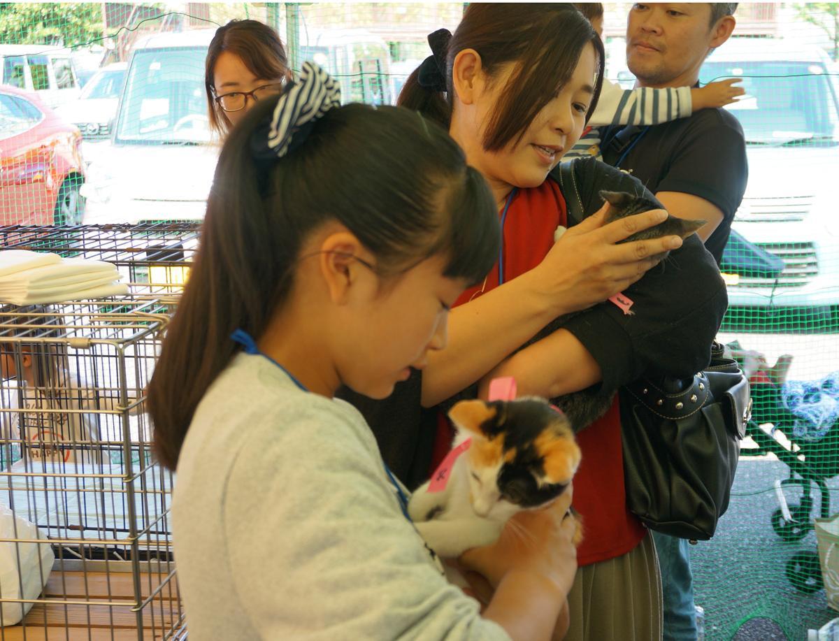 引き取り手を待つ子猫に触れる里親希望者たち