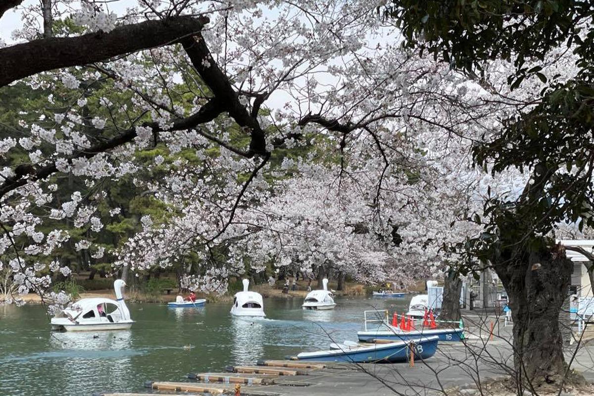 敷島公園ボート池(3月26日撮影)