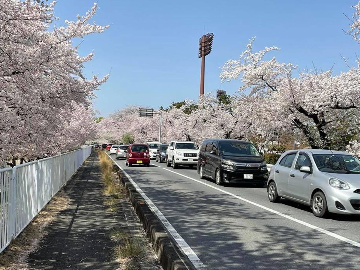 国体道路(3月31日撮影)