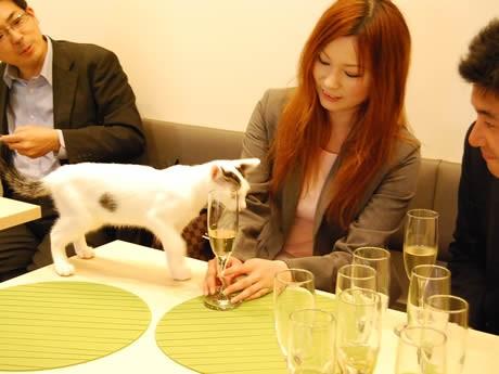 今泉に猫カフェ「NEKO CAFE KEURIG THE LOFT」がオープン