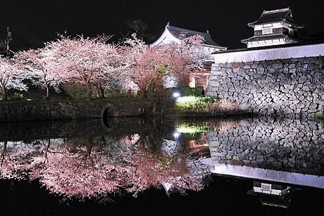 写真=第11回「森・花・緑のまちかど」写真コンテスト推薦「夜桜爛漫」