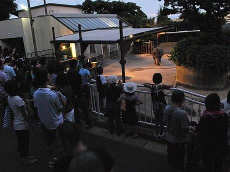 福岡市動植物園で8月4日より「夜の動植物園」が開園