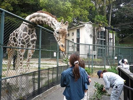 福岡市動物園で飼育員が動物の解説を行う「飼育の日」イベントを開催
