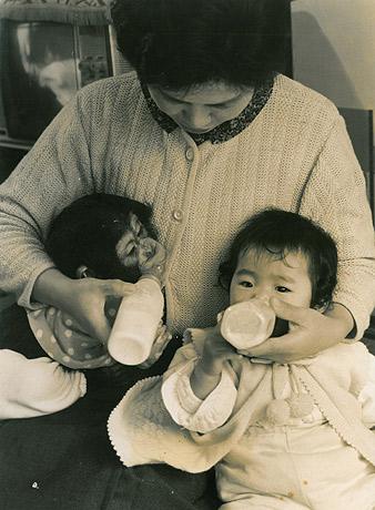 1962(昭和37)年の日本初となるチンパンジーの飼育下繁殖の様子