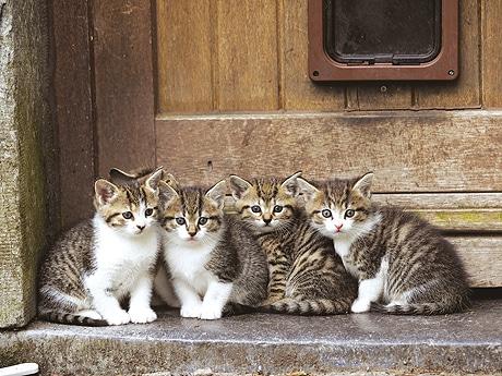 福岡三越で「岩合光昭の世界ネコ歩き写真展」が開催