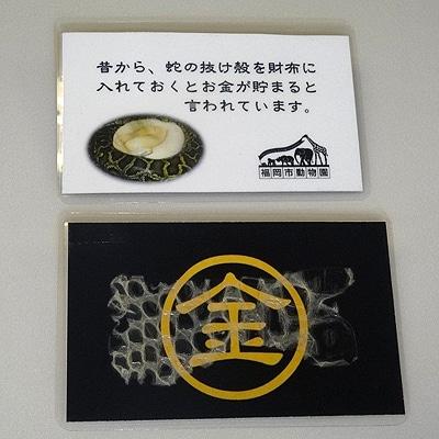 福岡市動物園お手製の「ヘビの抜け殻お守り」