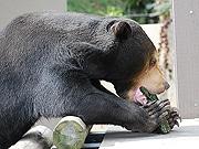 福岡市動物園で節分イベント マレーグマに恵方巻き、サル山では豆まきも