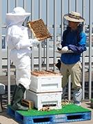 福岡三越が屋上で「都市養蜂」 「天神はちみつ」を販売へ