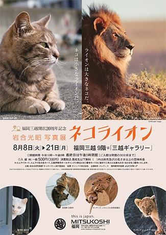 福岡三越で動物写真家・岩合光昭さんの写真展「ネコライオン」が開催