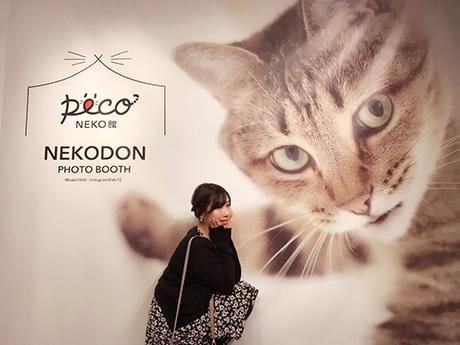 福岡三越で猫イベント「PECO NEKO館」が開催(写真は「ねこドン」イメージ)