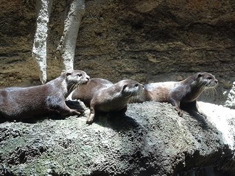 福岡市動物園でイベント「カワウソ~なんだ展」を開催(写真提供:福岡市動物園)