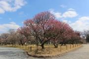 福岡・舞鶴公園で「福岡城 梅まつり」 「うめカフェ」も登場