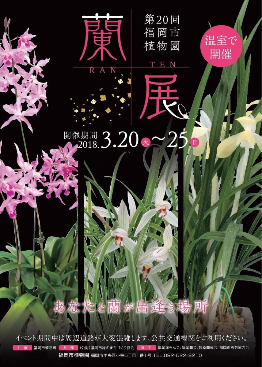 福岡市植物園で蘭展 3月20日より