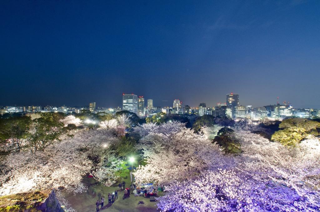 福岡城跡で「福岡城さくらまつり」が開催