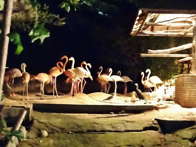 放鳥舎の様子(写真=福岡市動物園提供)