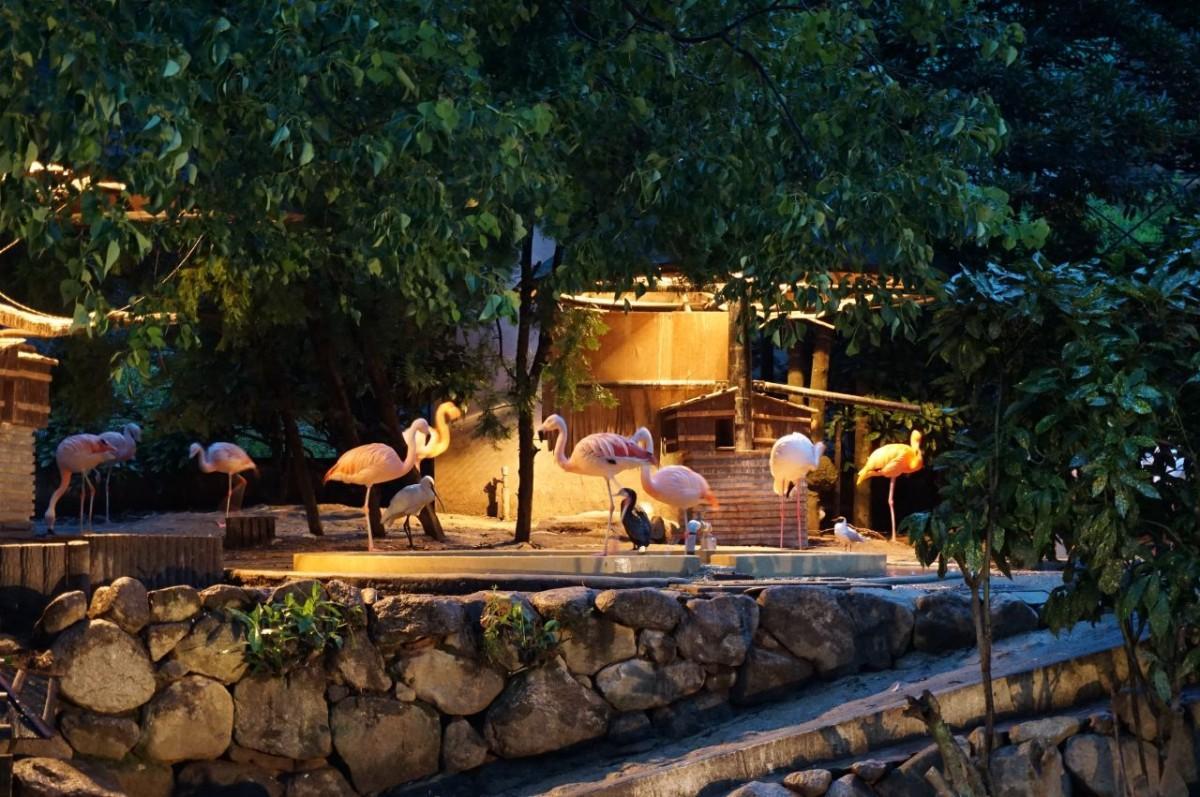 ライトアップされた、フラミンゴなどの放鳥舎(写真提供=福岡市動物園)