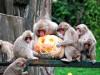 福岡市動物園でハロウィーンイベント 食堂で限定メニューも