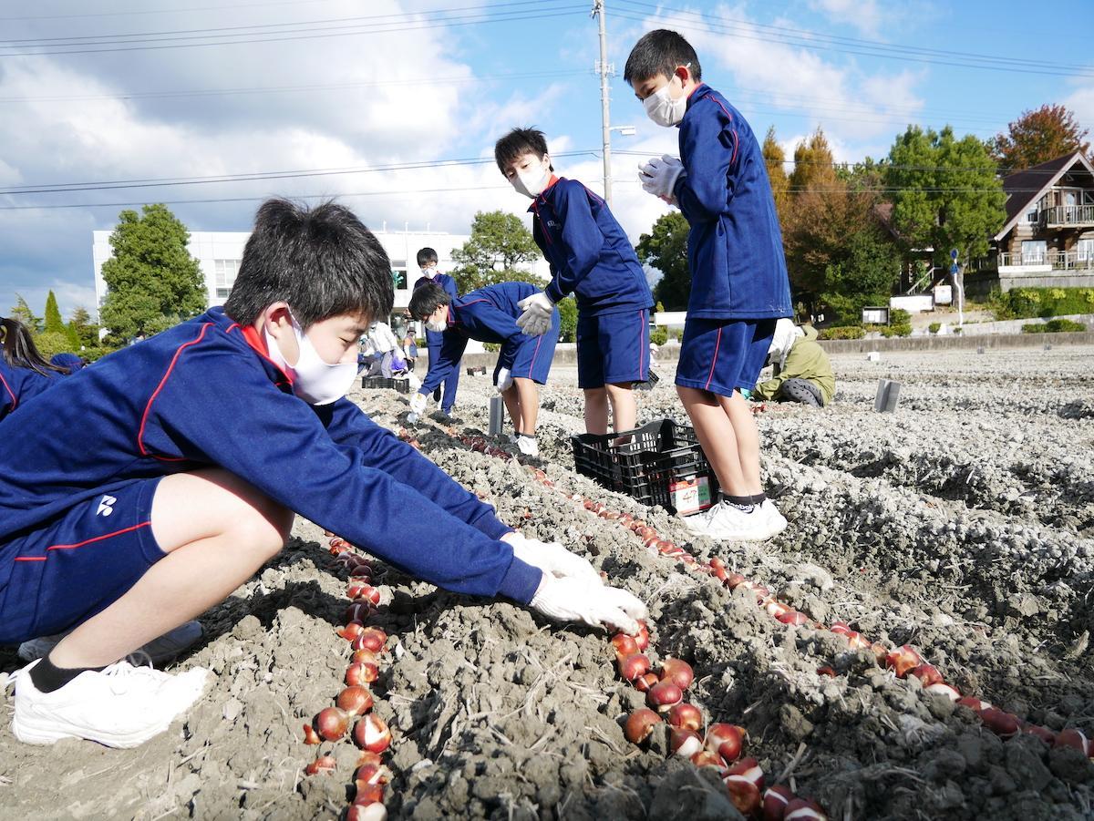 球根を植える北島中学校生徒会のメンバー