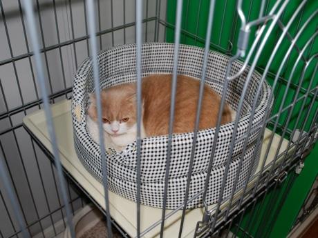 宿泊用の「部屋」でくつろぐペットの猫