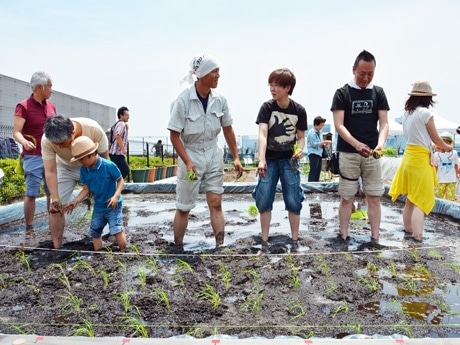 お台場のダイバーシティ東京プラザ屋上の「都会の農園」で田植えを行う参加者。