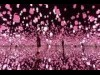 お台場で「チームラボ」春の作品 桜をはじめとした花々をモチーフに