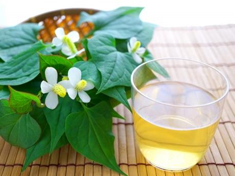 茶や万能薬として古来より親しまれてきたという和ハーブ「ドクダミ」