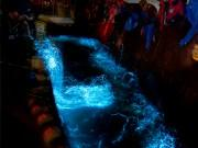 滑川で「ほたるいか海上観光」予約開始 早朝のホタルイカ漁を間近で見学