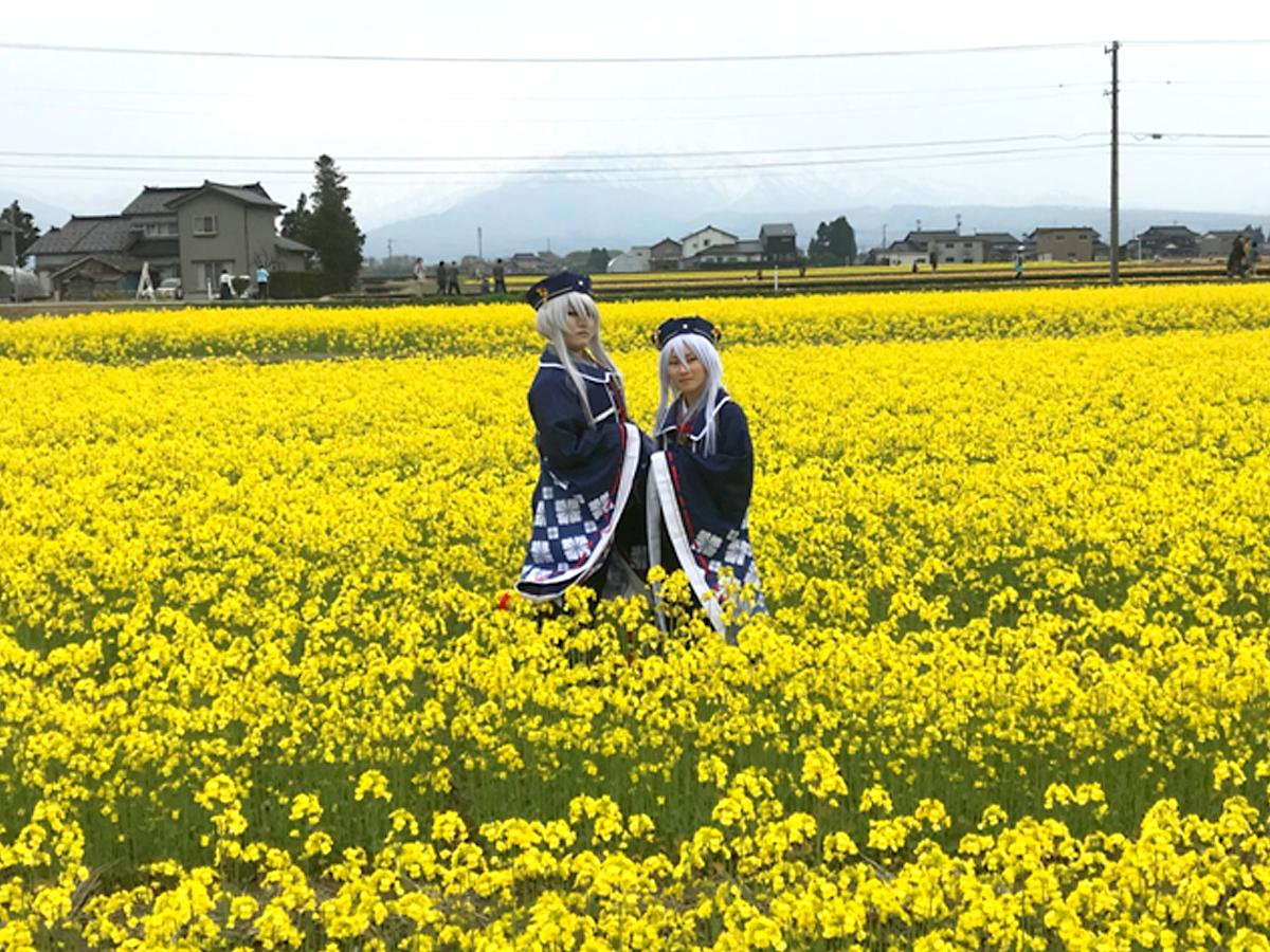菜の花畑とコスプレーヤー