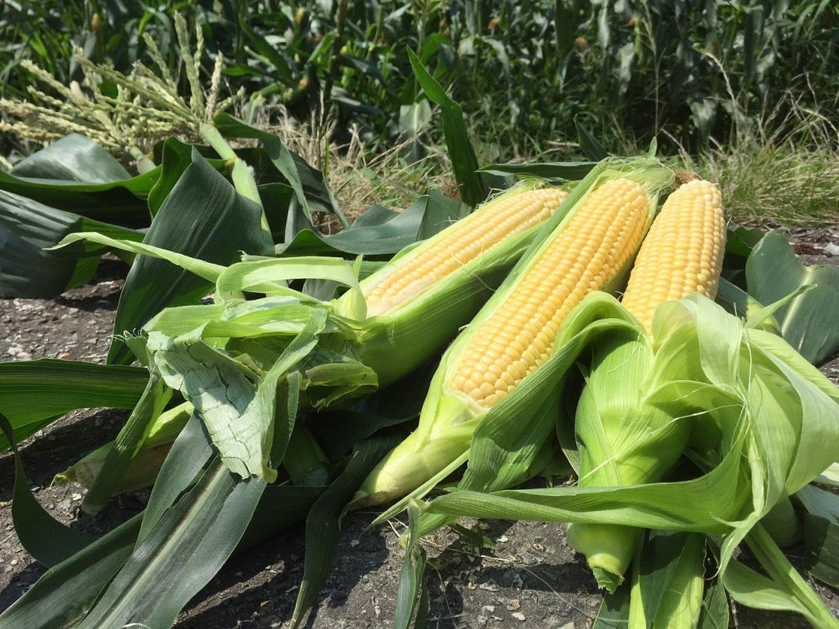 庄川産の朝採れトウモロコシを使用した商品が並ぶ