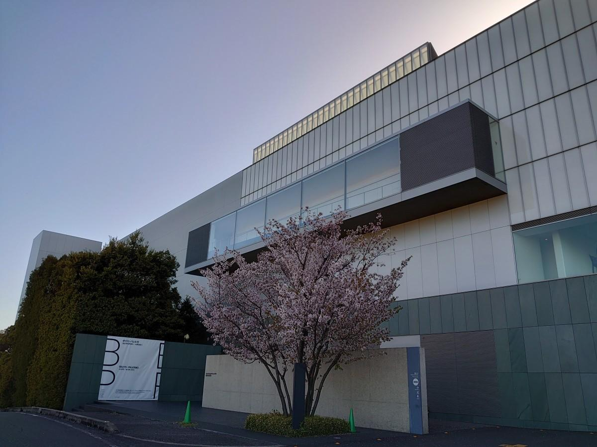 企画展「ボイス×パレルモ」を開催中の豊田市美術館