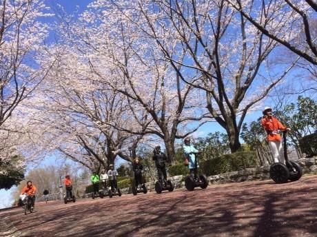 昨年の桜満開のアーチの中をセグウェイで走行する様子。