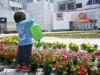 「ロボットの街つくば」を花で表現-センター広場でチャリティーイベント