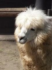 上野動物園が開園128周年-年間来園者数も300万人達成の見込み