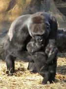 上野動物園、地震による被害無し-福島からカワウソの受け入れも予定