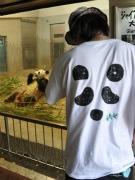 パンダの様子をケータイに動画配信-KDDI「パンダTODAY」始まる