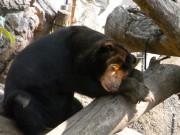 上野動物園、動物のために猛暑対策-来園客にはドライミストも