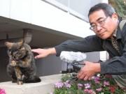谷中・夕やけだんだんの地域猫ドキュメンタリー映画、10年の撮影期間経て上映へ