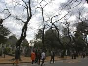 谷中霊園を訪れる「墓マイラー」が増加中-霊園地図、昨年は6000枚配布